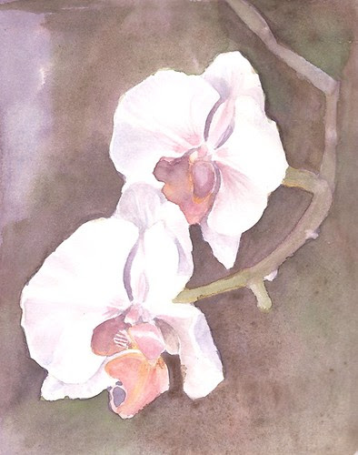 Orchids study - background changed by teshionx