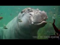 Pictures Of Adventure Aquarium