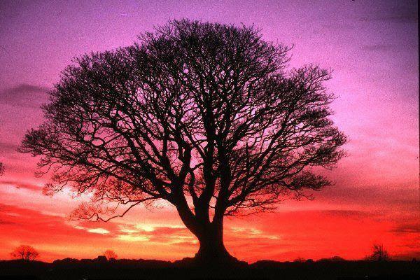 El árbol De La Vida La Inmortalidad Y El Trono De Dios