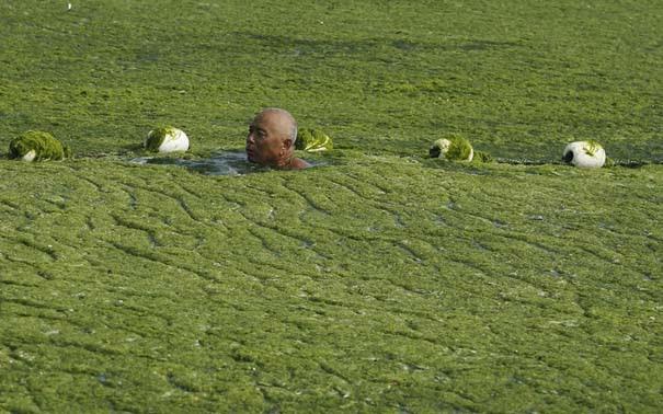«Θάλασσα» από πράσινο στις ακτές της Κίνας (3)