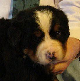 Star's puppy