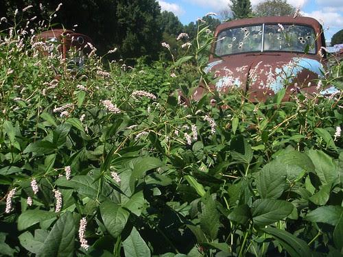 truck, plants