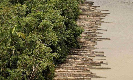 Illegally logged timber, Amazon jungle