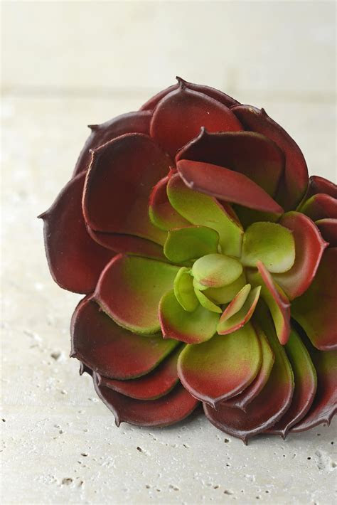 Faux Succulents Burgundy Echeveria