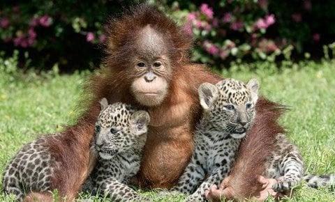 Baby Animals 17 Cute Baby Animals