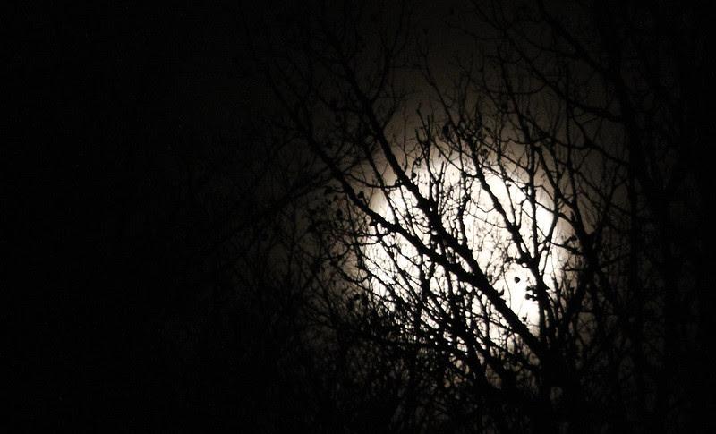 branchy moon