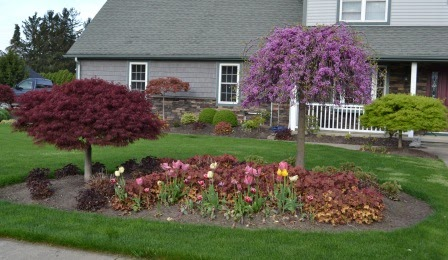Landscaping ideas what plant goes where in the landscape for Landscaping adelaide north