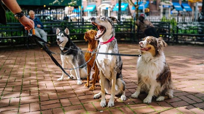 Consejos para pasear bien a tu perro