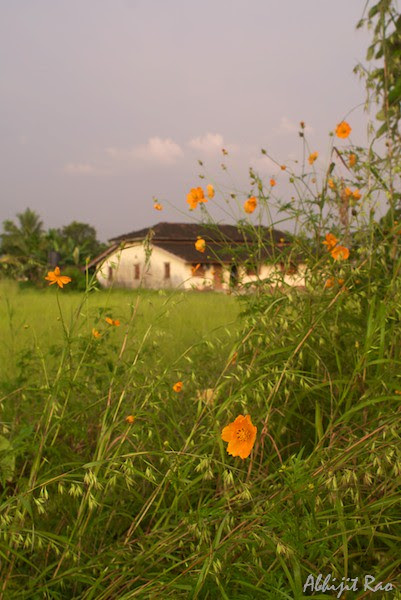 flowers and a house at sunset