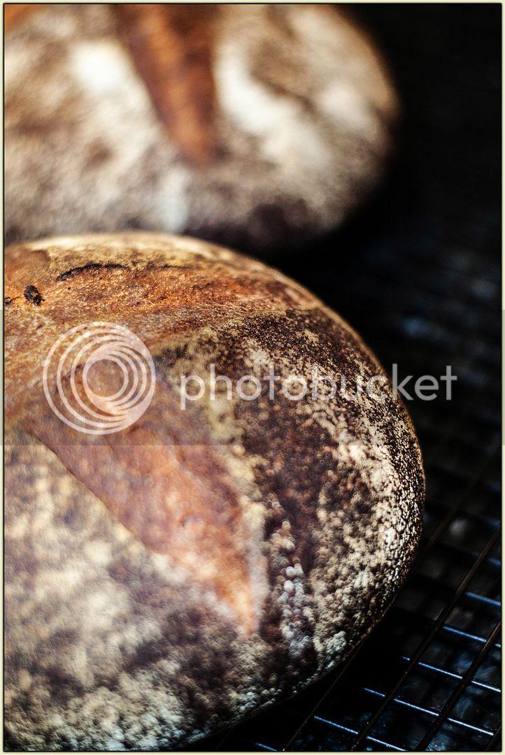 Pain au Levain with Whole Wheat