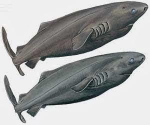 Hiu sering disebut sebagai salah satu jenis ikan yang khusus 5 Ikan Hiu Terbesar di Dunia