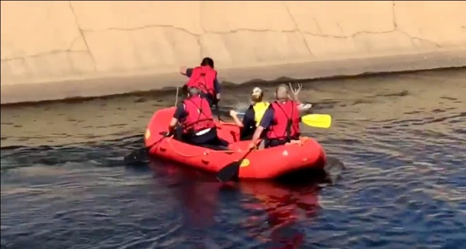 Valientes bomberos rescatan a unos ciervos a punto de ahogarse a causa de una pelea de pareja