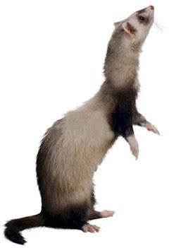 Eric The Ferret