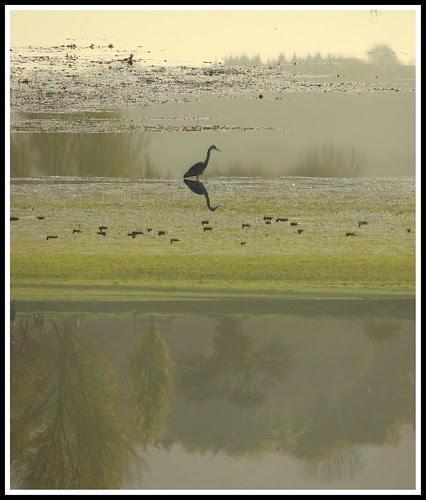 Upside down Heron reflection