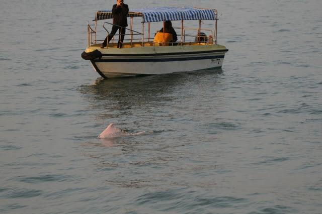 香港海豚保育學會2