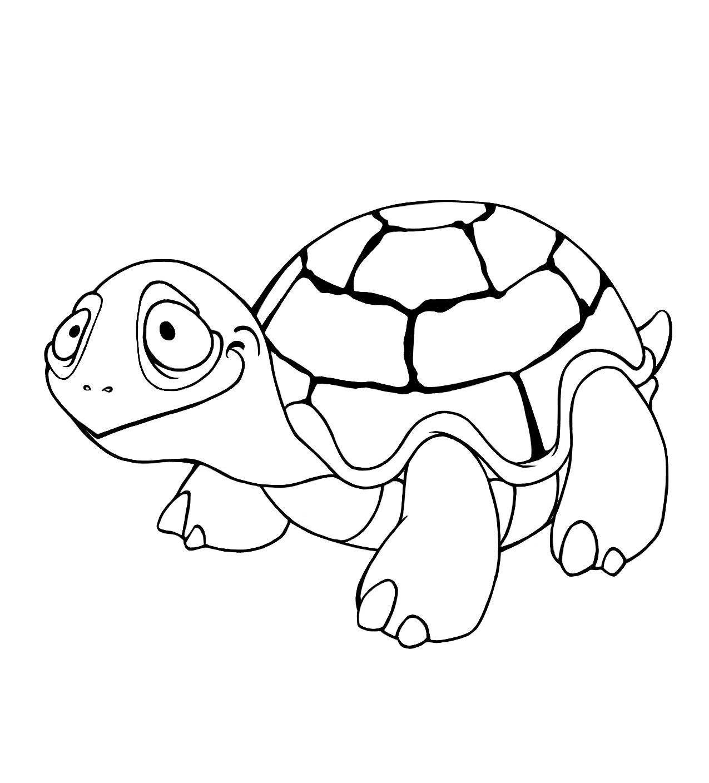 Dessin de tortue imprimer et colorier