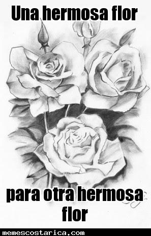 Rosa Memes Costa Rica