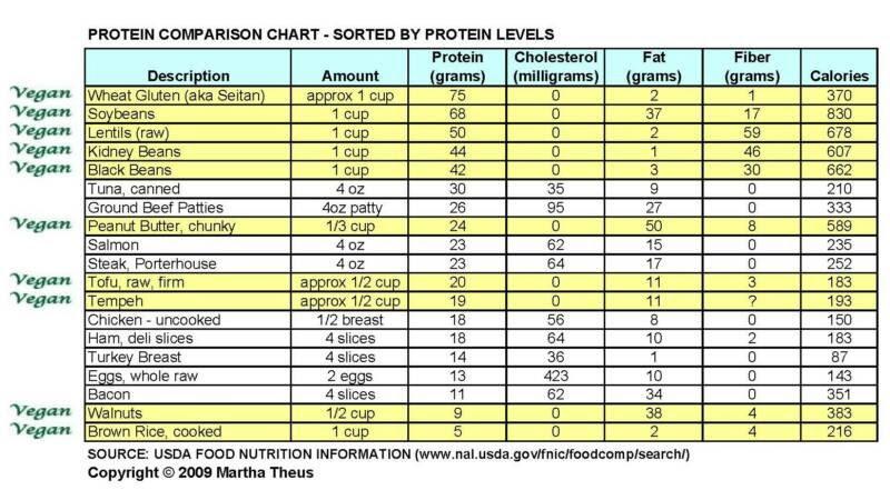 Nutrition Protein Diet
