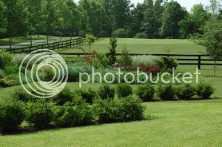 Daniels' Grass Garden