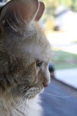 Jasper on patrol