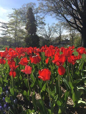 Queens Botanical Garden (Flushing, NY): Top Tips Before