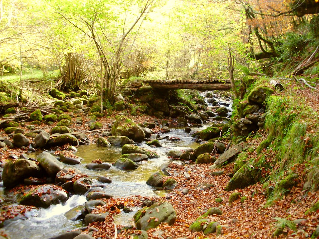 Bosque de Lindes 017