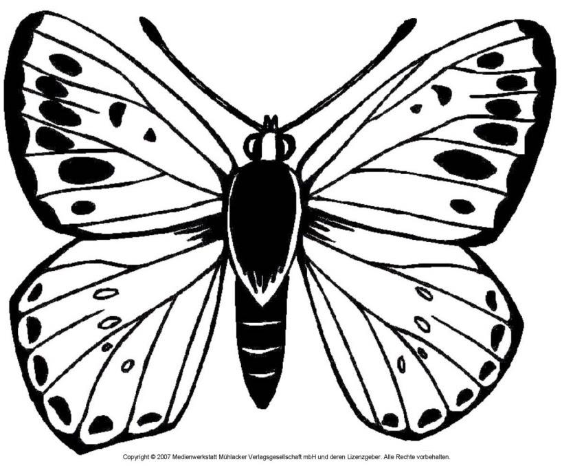 Schmetterling 4 - Medienwerkstatt-Wissen © 2006-2017 ...