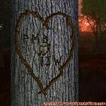Our Tree in the Forest of Love