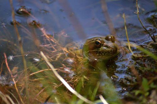 super close frog