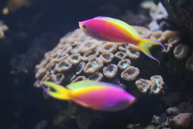 lisbon oceanarium 4