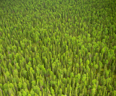 23 фото девственных лесов Коми: Печоро-Илычский заповедник и парк «Югыд Ва»