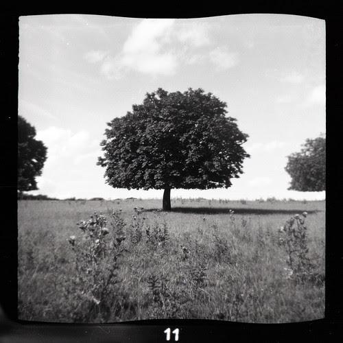 Horse Chestnut by pho-Tony