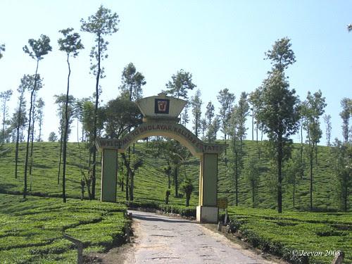 Sholayar & Kallyar Estate