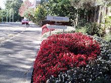Massey Univ.
