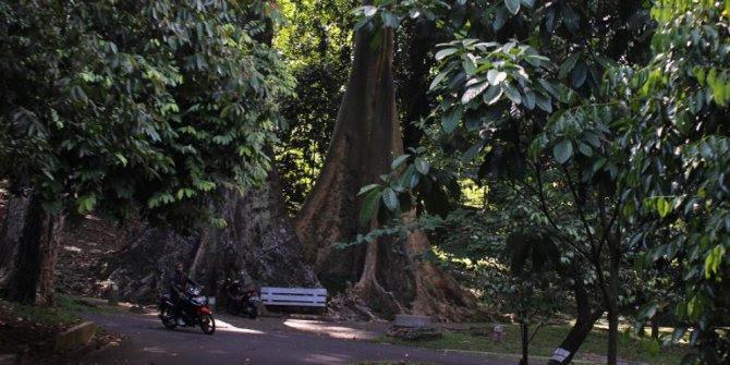 Pohon Jodoh di Bogor