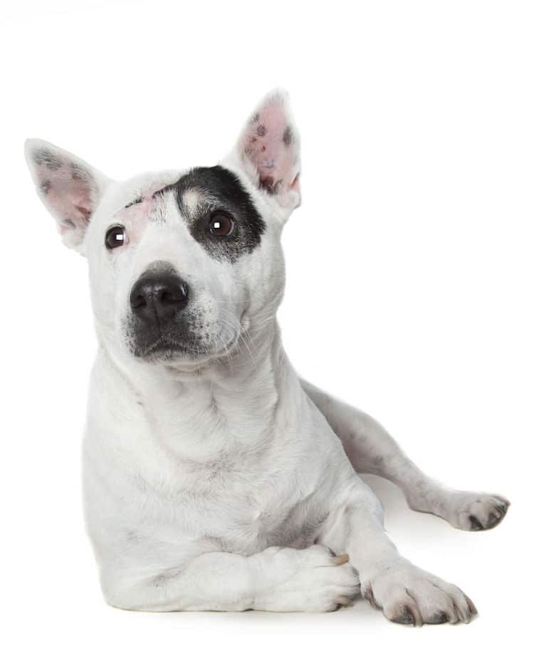 Alex Cearns perros minusvalidos 5