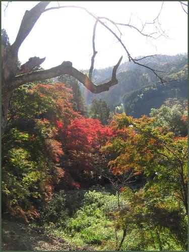 EN23 brances forest mountains