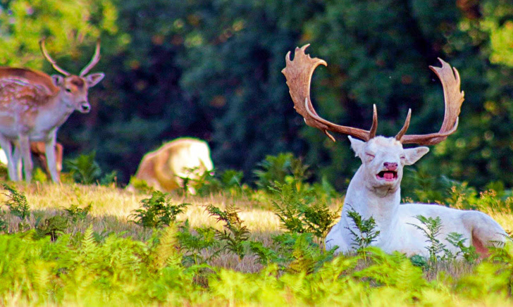 5 - Just a photo of an albino deer, sneezing