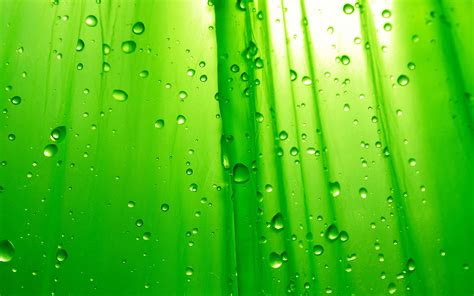 green wallpaper colors wallpaper  fanpop