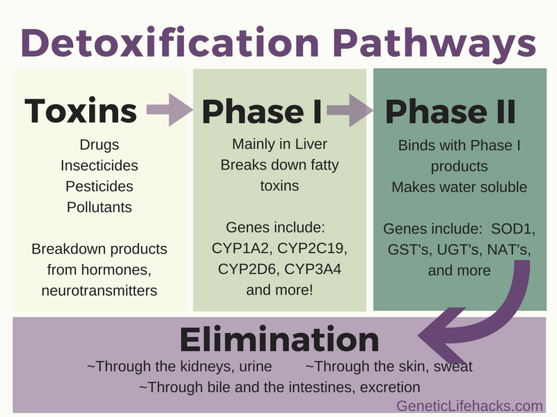 Image result for phase 1 detoxification