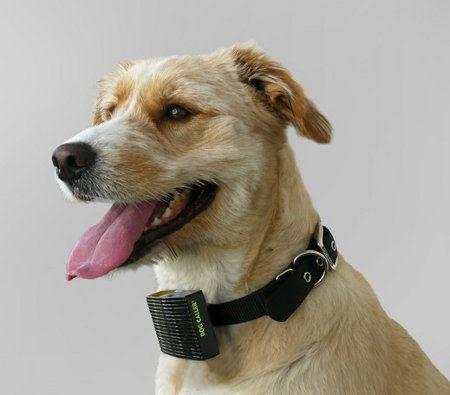 Nuevo collar que indica si tu perro sufre mucho calor