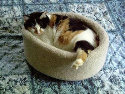 Casual cat