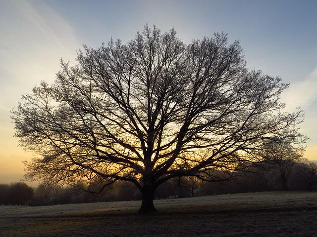 Tree on the Tumulus Field