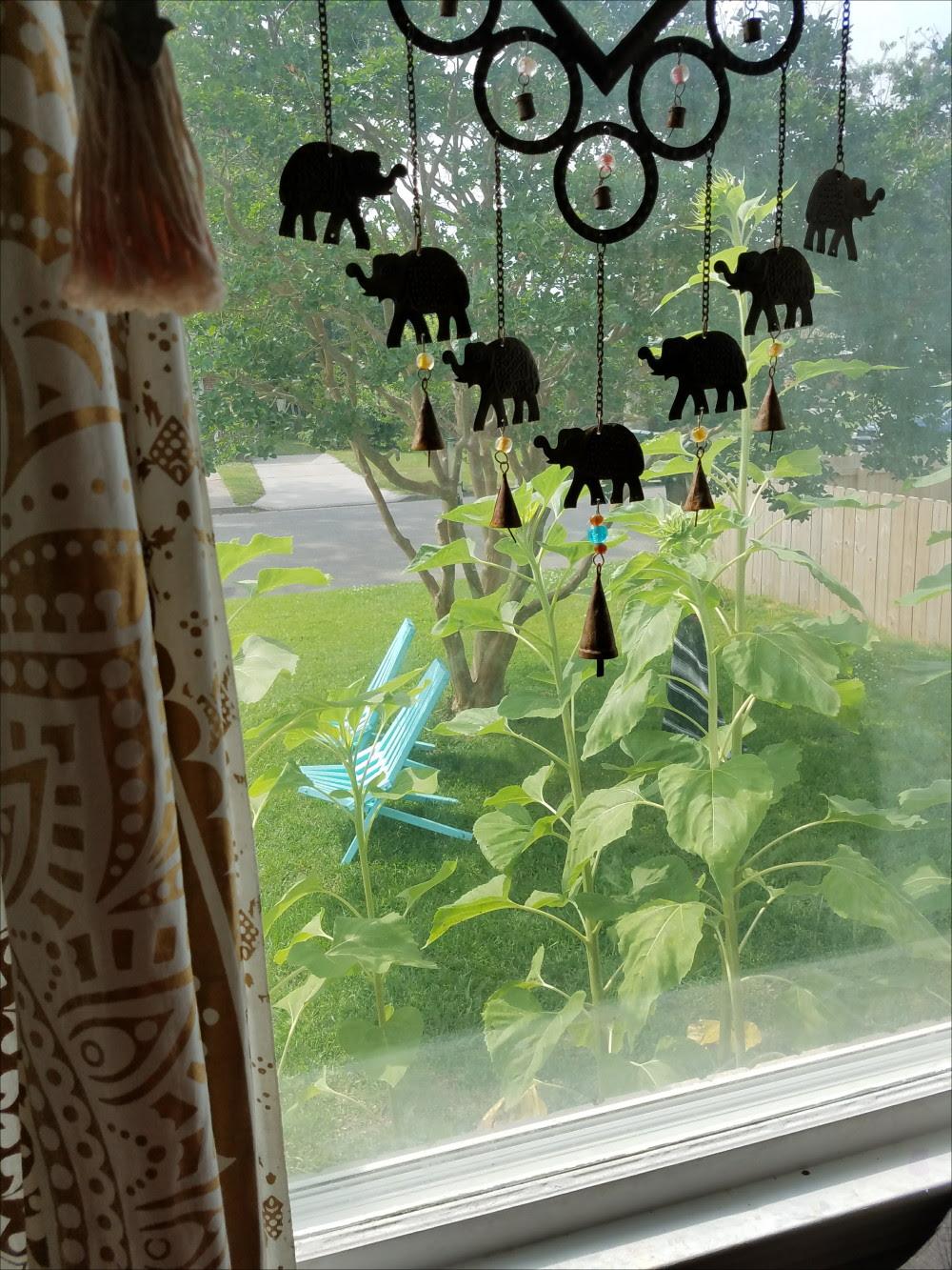 Looking put the window. Giant sunflowers, aqua yard chairs, elephant sunshine. - @adesignerathome