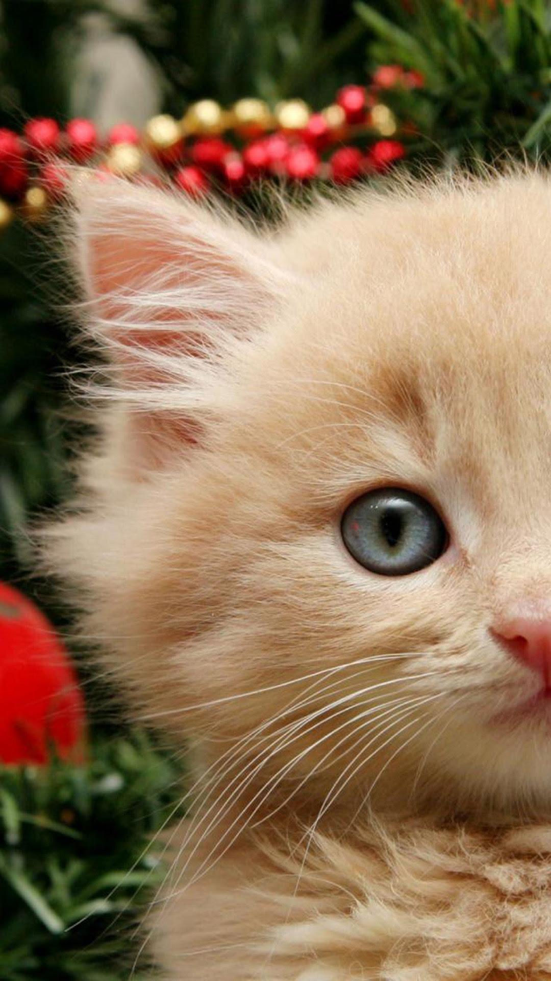 Cat iPhone Backgrounds | PixelsTalk.Net