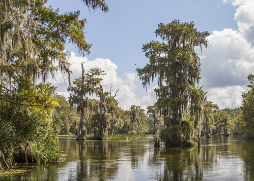 Trees on the Wakulla River