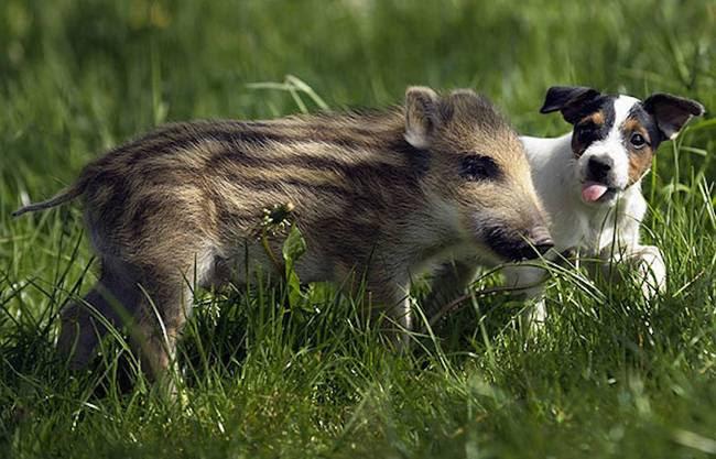 amizades-incomuns-com-animais-9