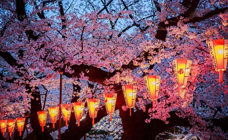primavera-flores-cerezo-sakura-japon-national-geographic (13)