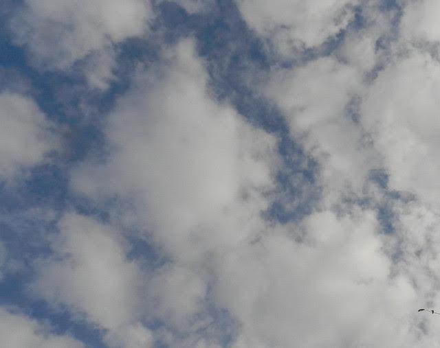 skywatchDSCN2199