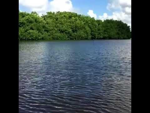 Vuelo de Patos en Laguna de Perucho, Nagua, RD